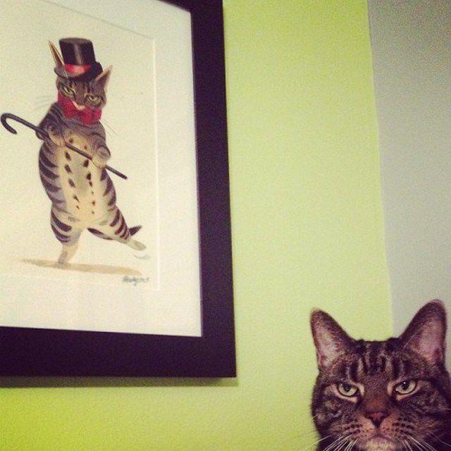 gatos_animales_antipaticos (12)