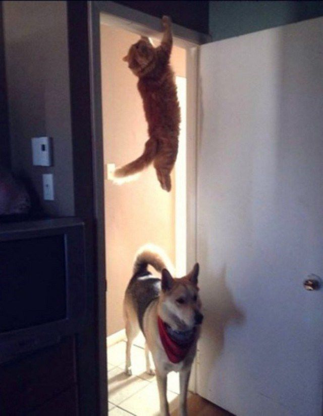 gatos_animales_antipaticos (8)