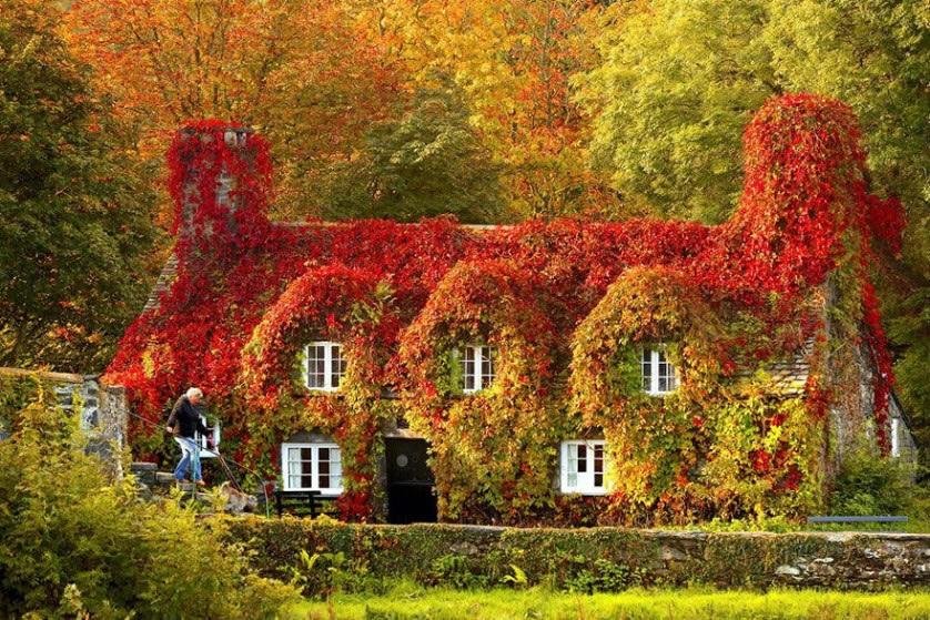 Fotografías del otoño antes y después (5)