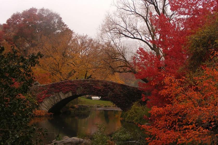 Fotografías del otoño antes y después (12)