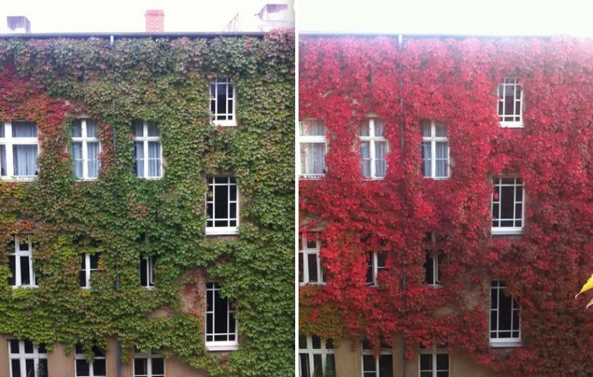 Fotografías del otoño antes y después (11)