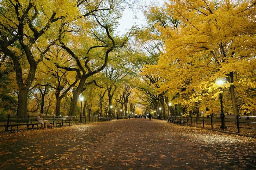 Fotografías del otoño antes y después (16)