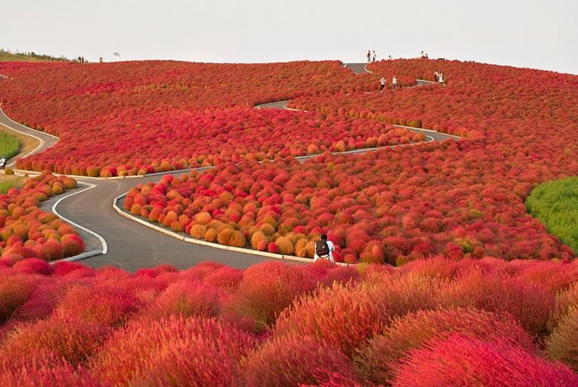 Fotografías del otoño antes y después (14)