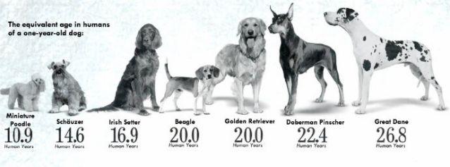 perros_edades_razas