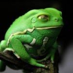 11 ranas con poderes extraordinarios
