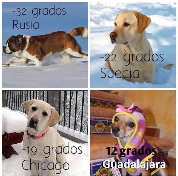 Marcianadas_2111catorce (15)