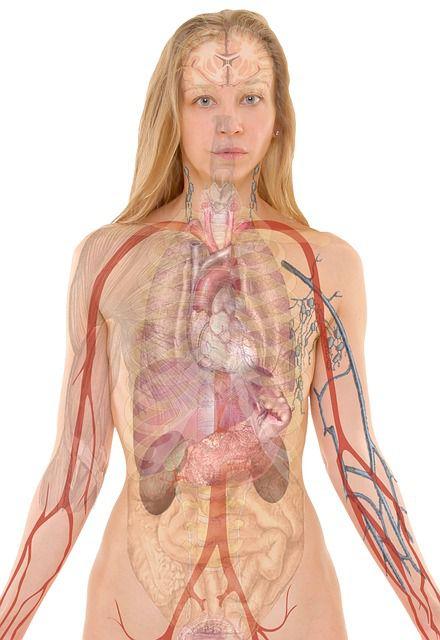 anatomia_mujer