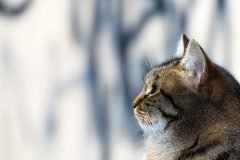 Cómo pasaron los gatos de felinos salvajes a animales domesticados