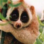 El lado negro de compartir videos de animales lindos en Internet