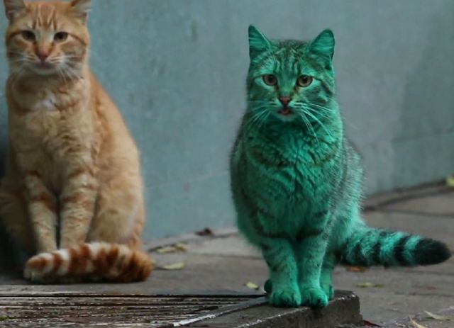 gato-hulk