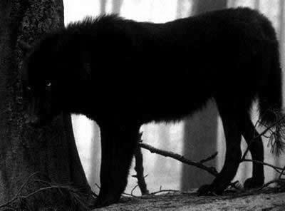 perros_negros_infernales (2)