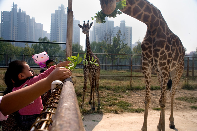 zoologico china scott brauer (15)