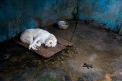 La triste realidad de los zoológicos chinos revelada en una serie fotográfica