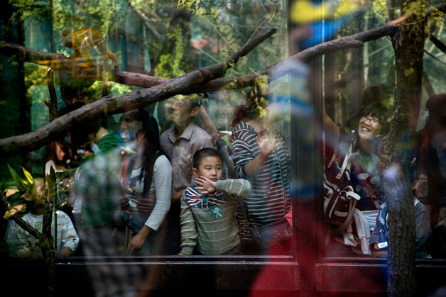 zoologico china scott brauer (17)