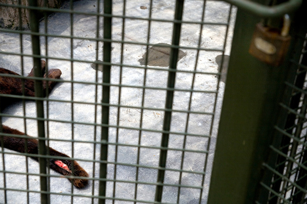 zoologico china scott brauer (24)