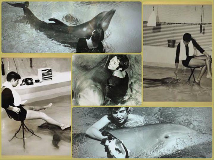 Margaret Howe Delfín Peter