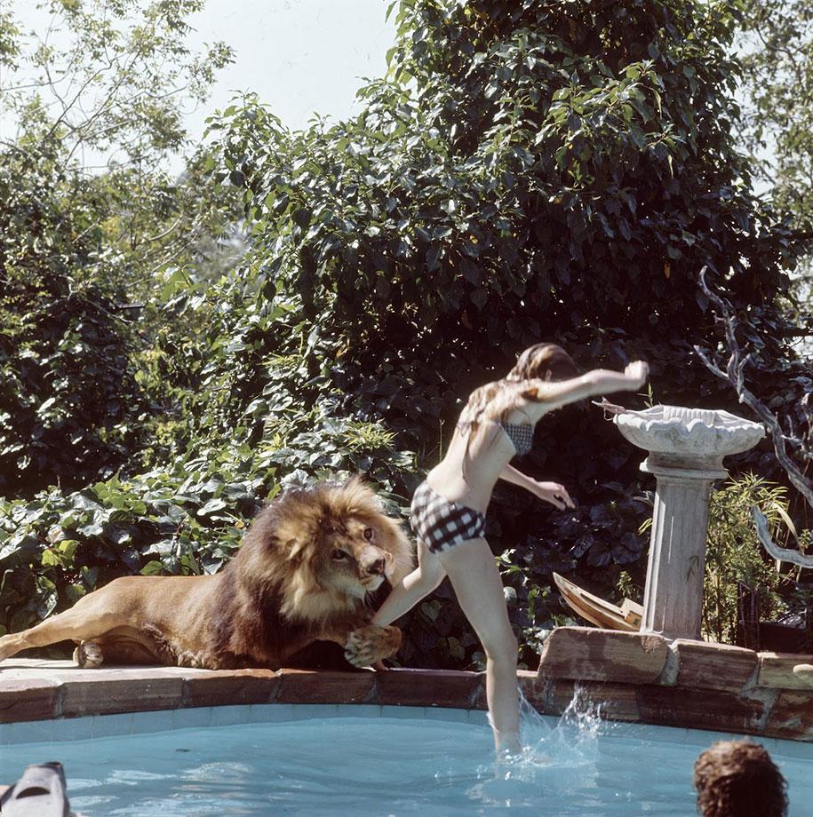 Roar leon Neil (1)