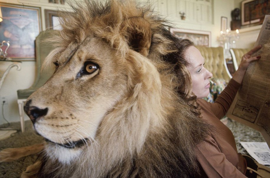 Roar leon Neil (5)