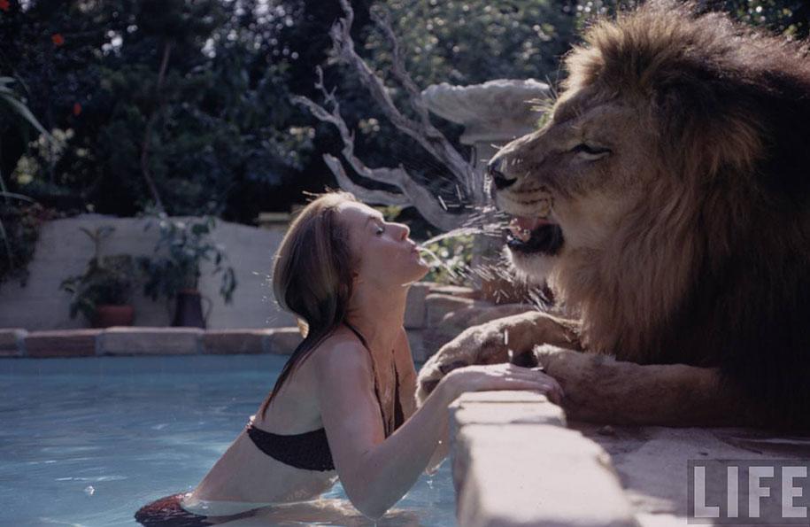 Roar leon Neil (8)