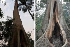 Un árbol en Guinea podría ser el origen del brote de Ébola