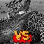 6 animales que matan a los peores depredadores de la naturaleza con facilidad