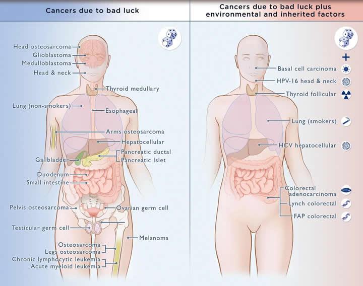 cancer mala suerte y otros factores