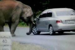 elefante aplasta automovil