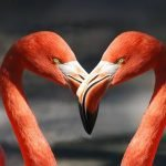 8 investigaciones que revelaron cosas extrañas sobre el amor