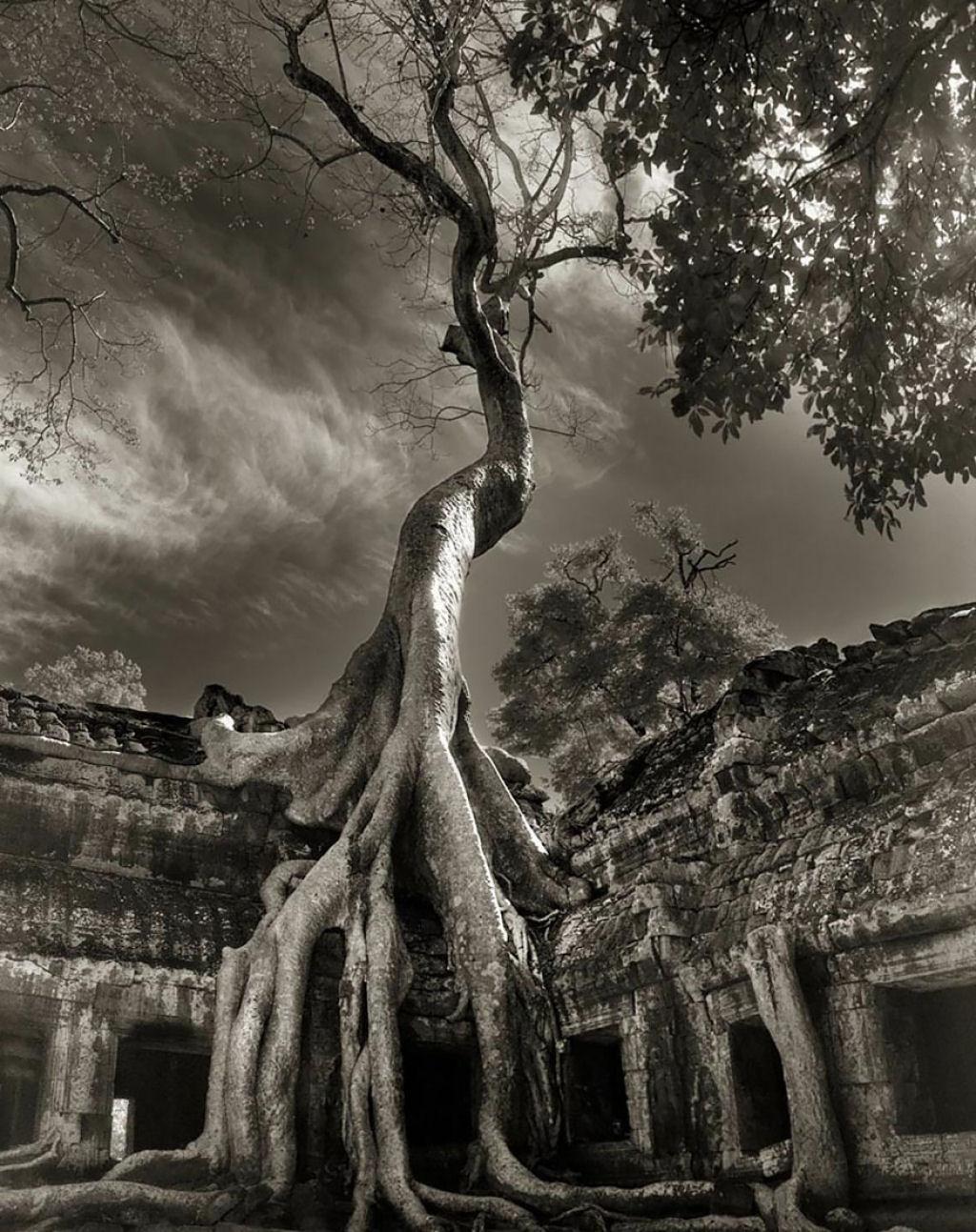 fotografías arboles antiguos por beth moon (1)
