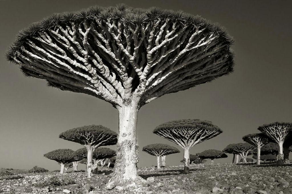 fotografías arboles antiguos por beth moon (10)