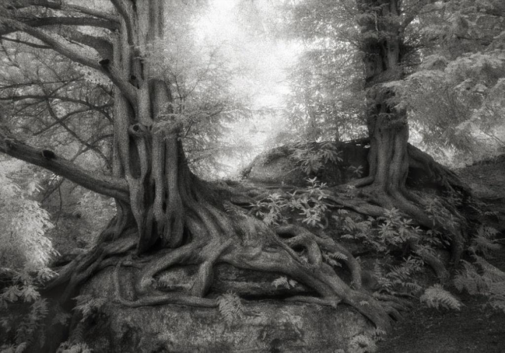fotografías arboles antiguos por beth moon (11)