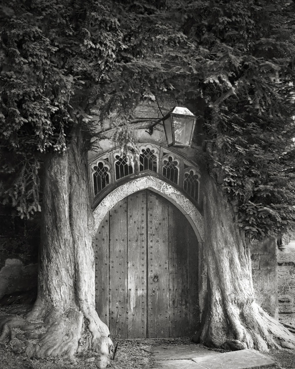 fotografías arboles antiguos por beth moon (12)
