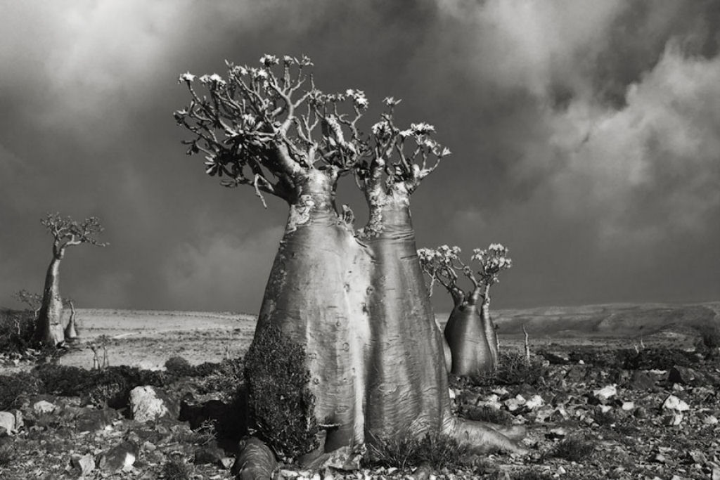 fotografías arboles antiguos por beth moon (13)