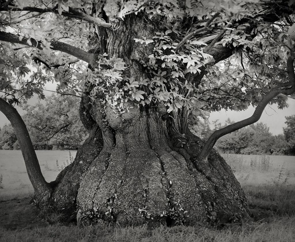 fotografías arboles antiguos por beth moon (14)
