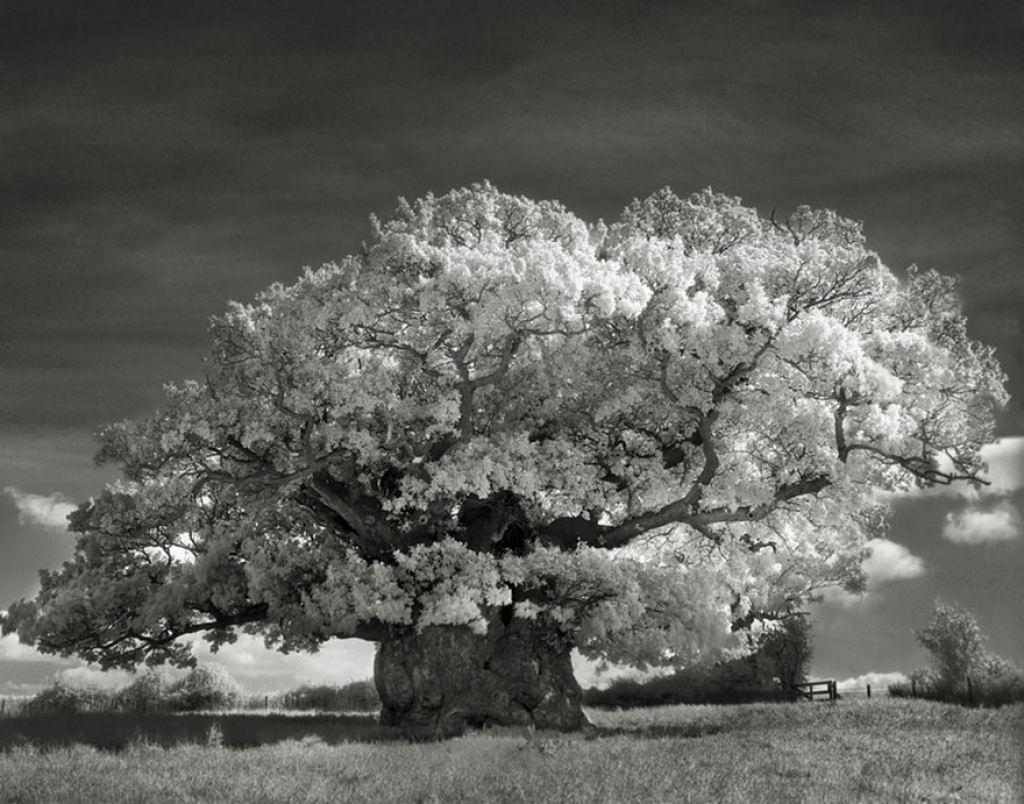 fotografías arboles antiguos por beth moon (16)