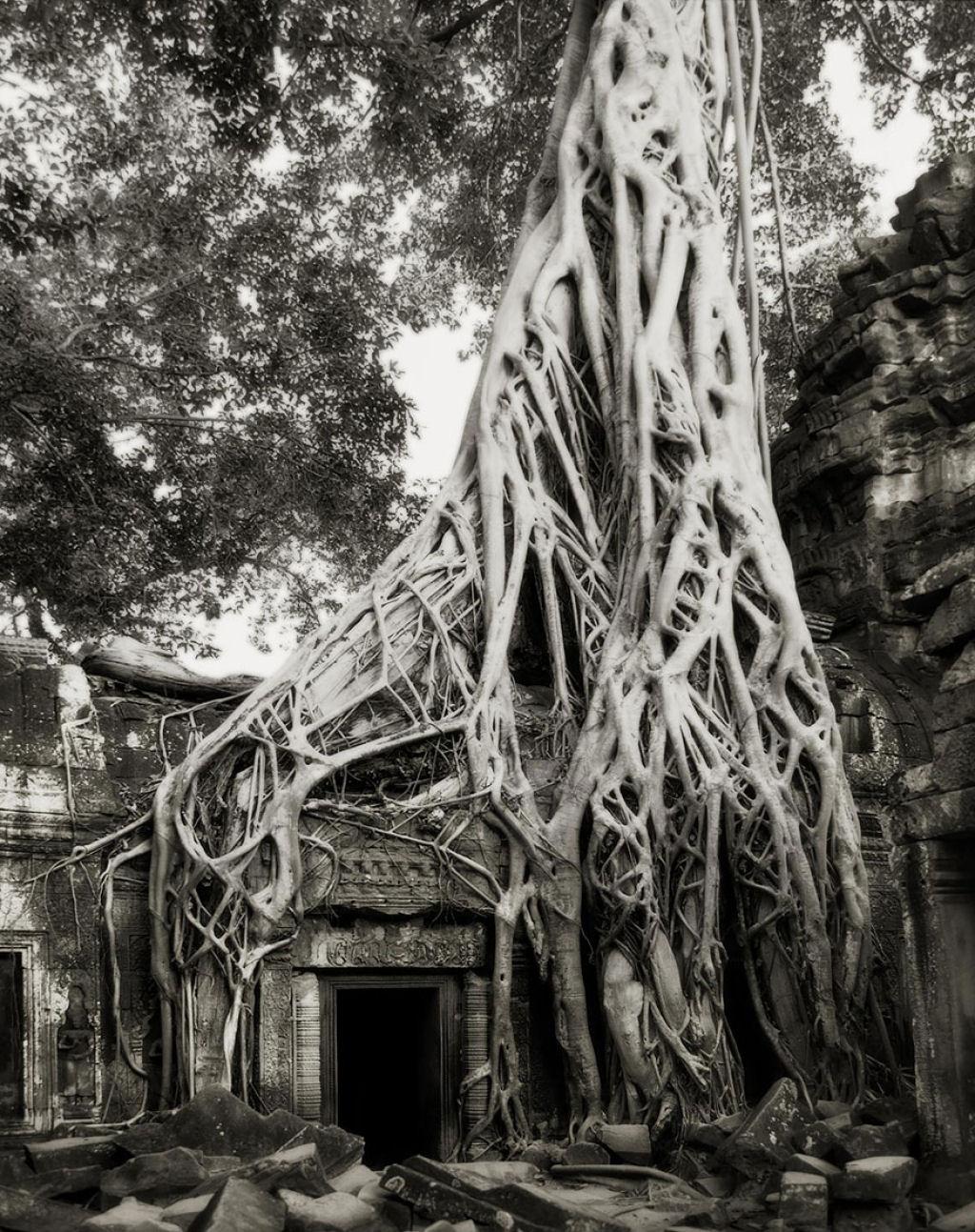 fotografías arboles antiguos por beth moon (17)