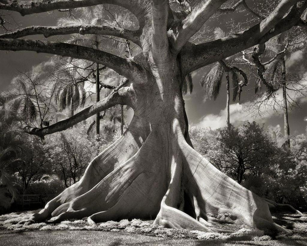 fotografías arboles antiguos por beth moon (18)