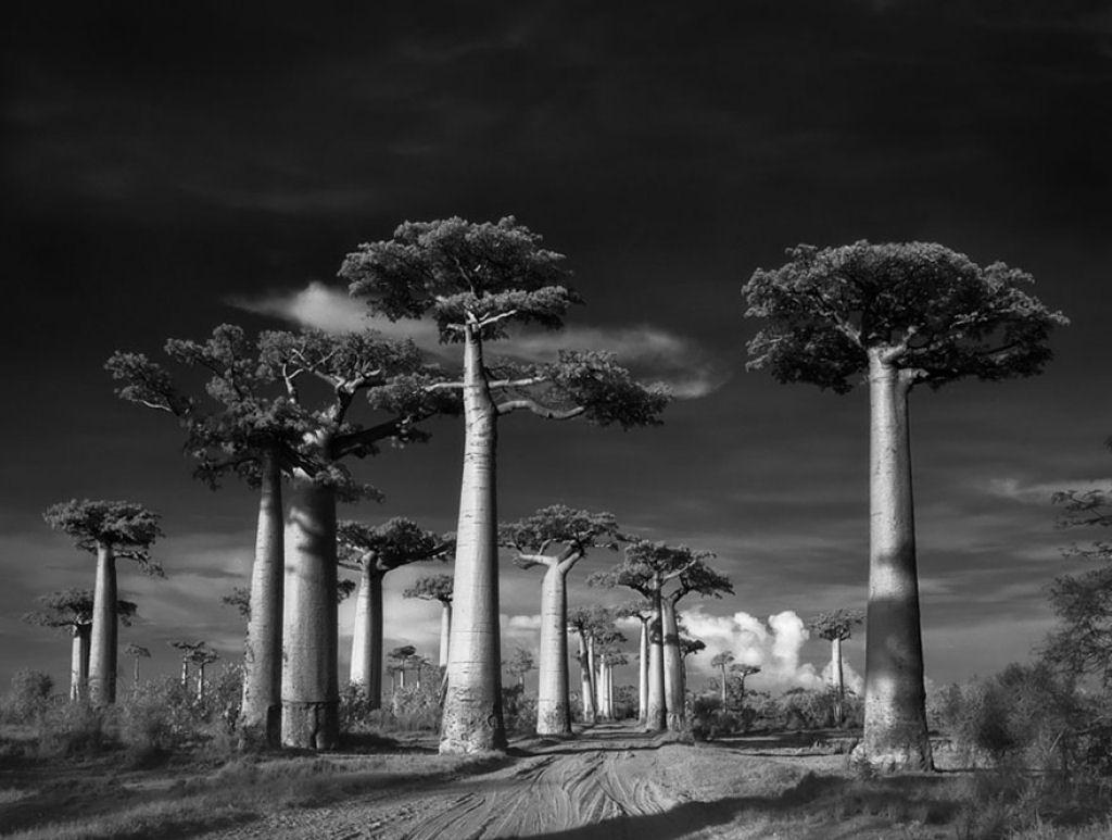 fotografías arboles antiguos por beth moon (19)