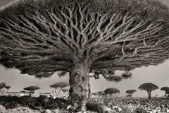 Los árboles más antiguos y extraños, un proyecto fotográfico de 14 años