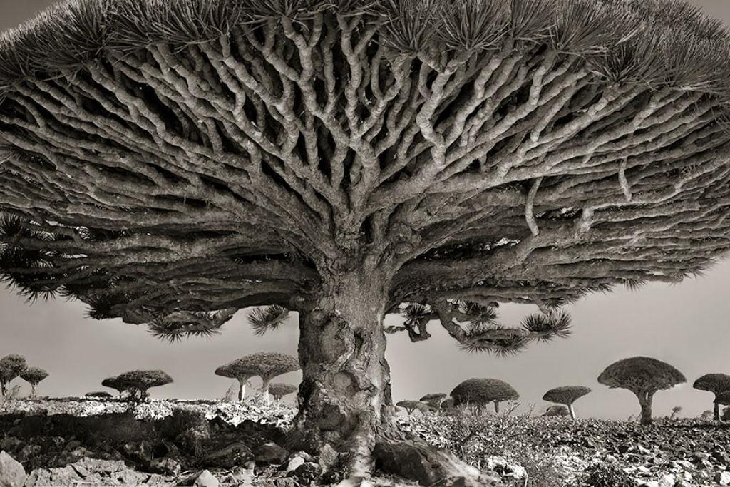 fotografías arboles antiguos por beth moon (20)