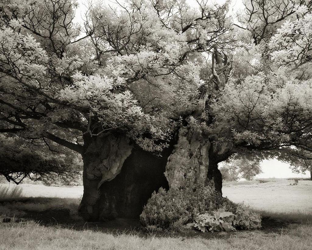 fotografías arboles antiguos por beth moon (3)