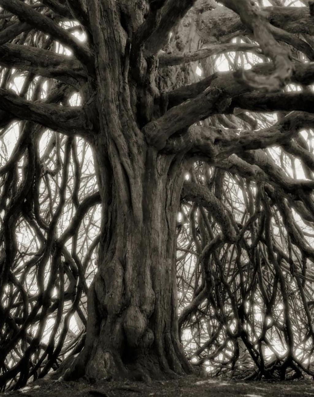 fotografías arboles antiguos por beth moon (4)