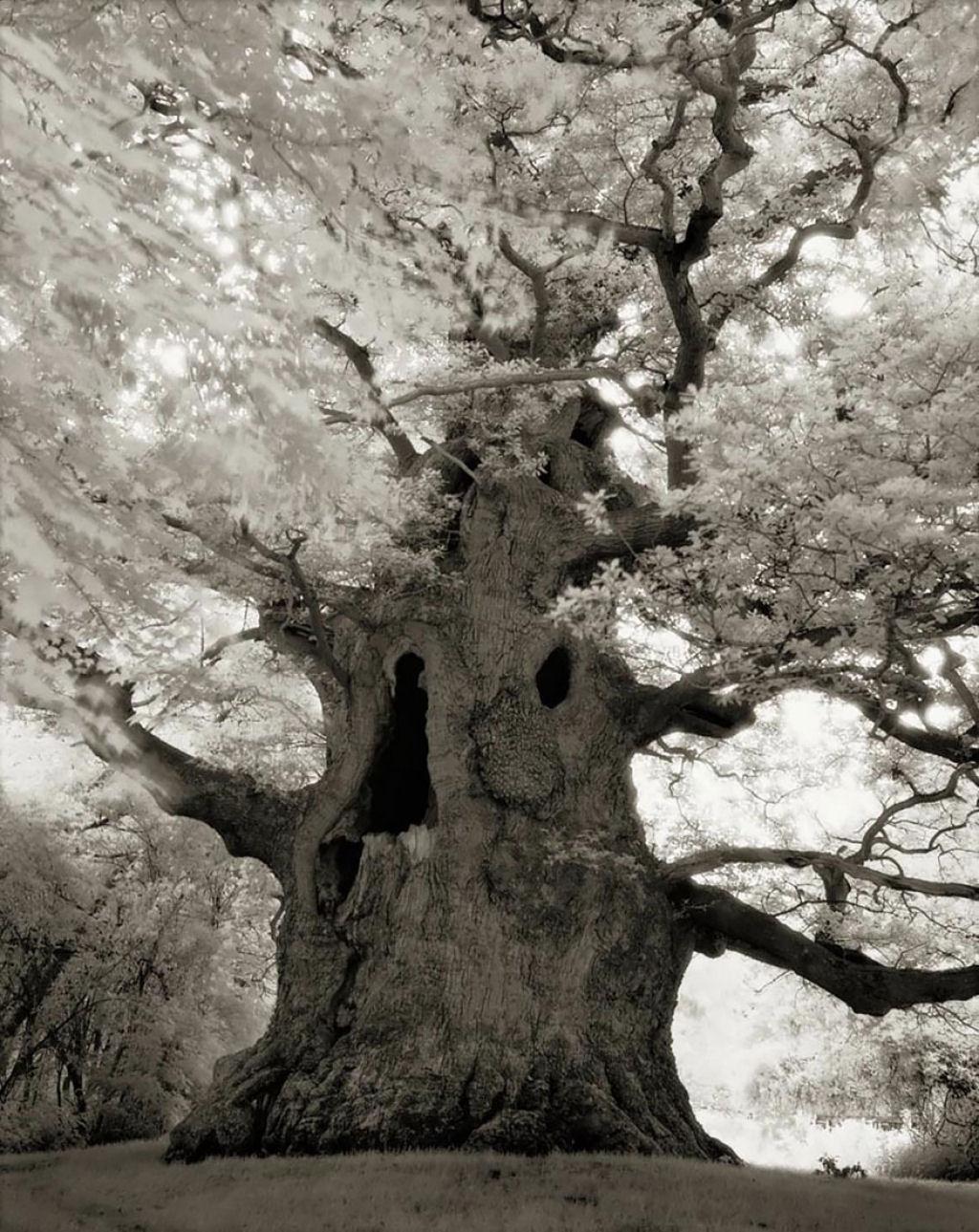 fotografías arboles antiguos por beth moon (5)