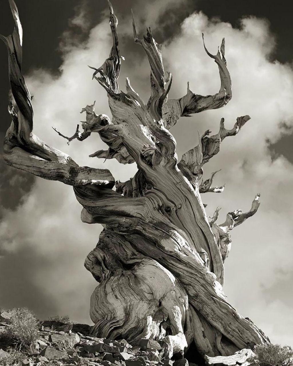 fotografías arboles antiguos por beth moon (6)