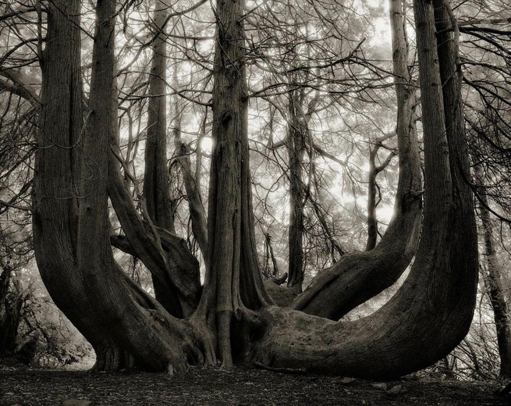 fotografías arboles antiguos por beth moon (7)