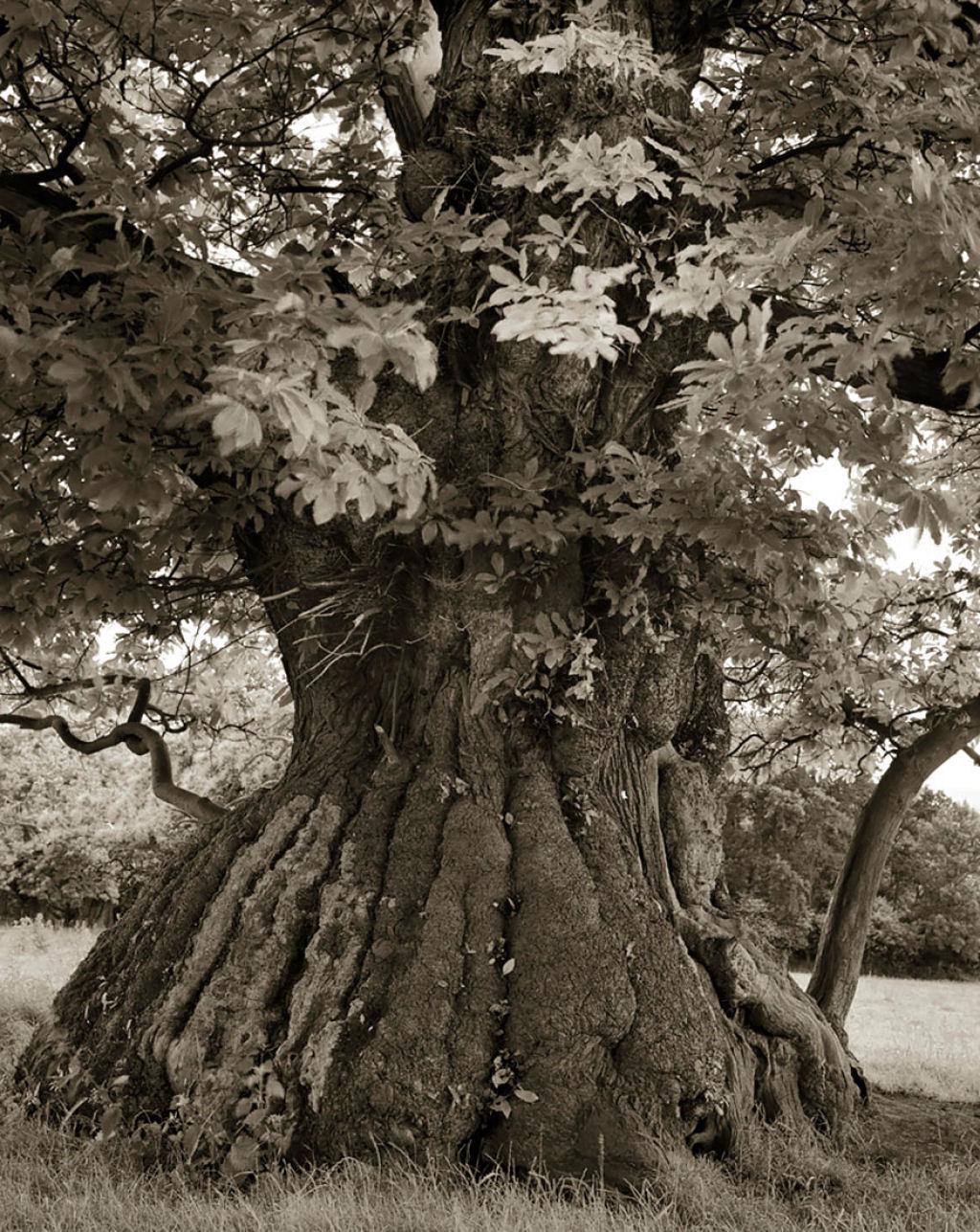 fotografías arboles antiguos por beth moon (8)