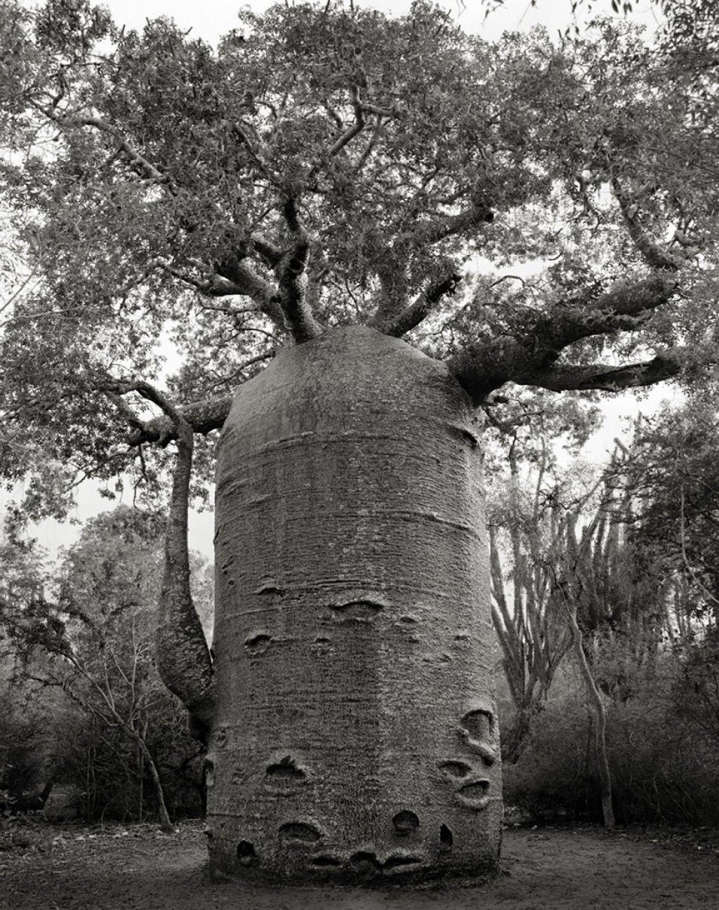 fotografías arboles antiguos por beth moon (9)