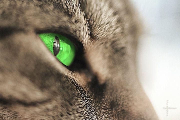 gato ojo