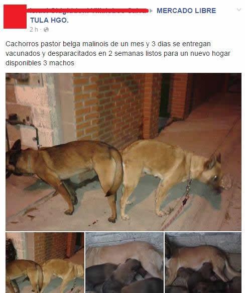 Marcianadas_166_1036130215 (180)