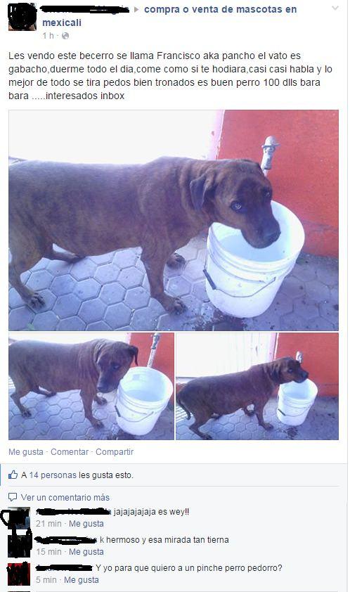 Marcianadas_166_1036130215 (278)